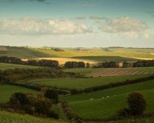 Beautiful Marlborough Downs in Wiltshire